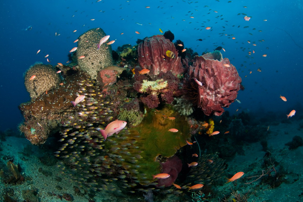 Scuba Diving East Timor | Coral Triangle