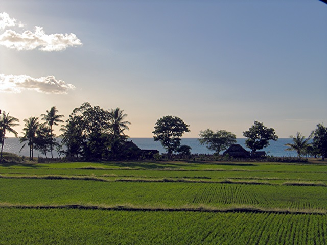 Rice Fields & Beach