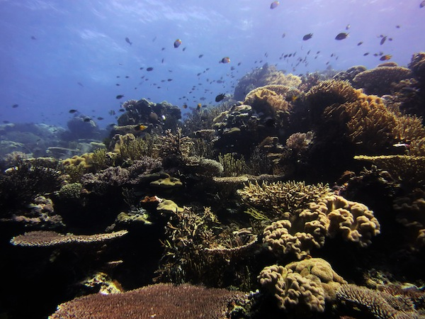 PADI Underwater Naturalist Course in East Timor