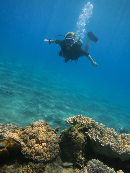 PADI Diving Course in Timor