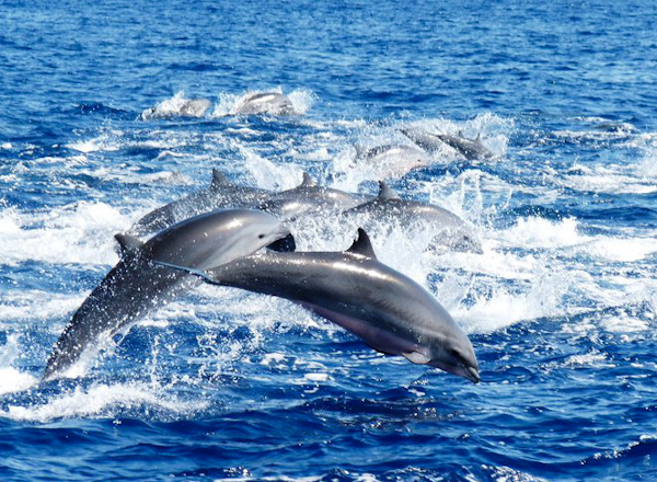 Dolphin & Whale Watching Trips
