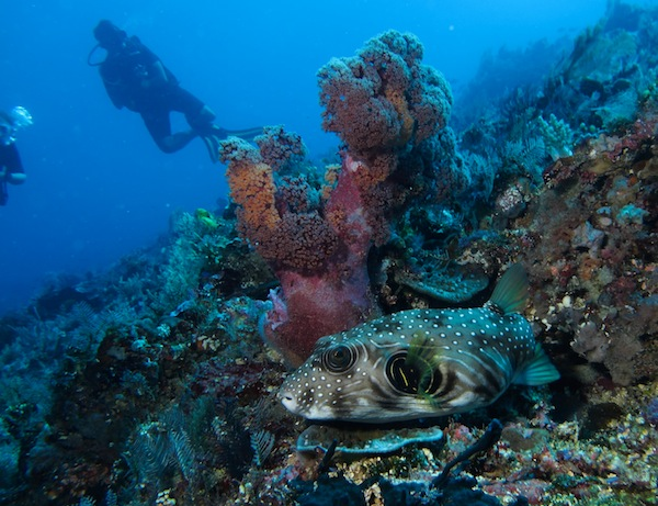 Scuba Diving Course in East Timor